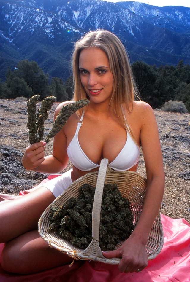 pot stocks, gangia stocks marijuana stocks hot ass females